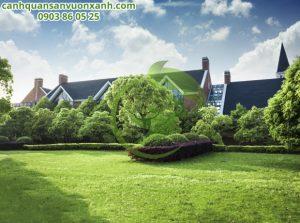 Cỏ sân vườn