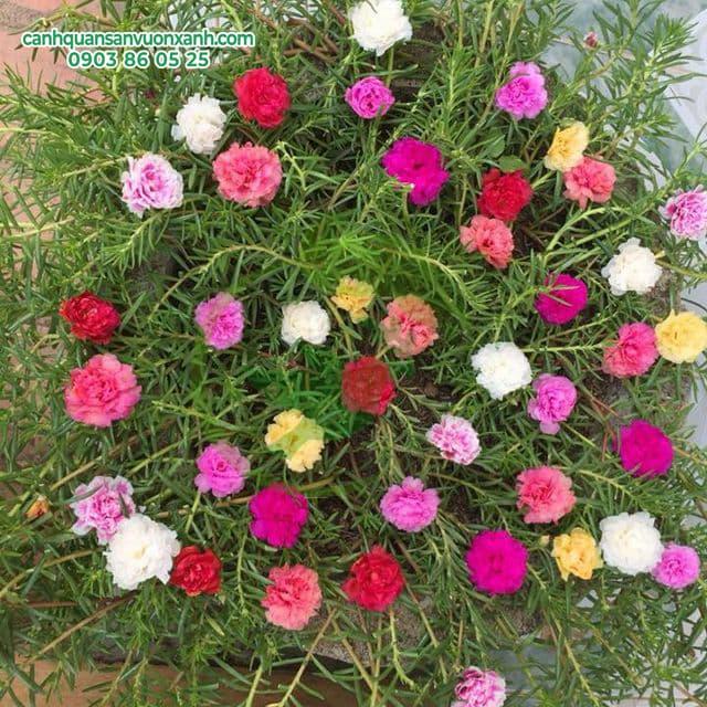 hoa muoi gio
