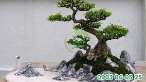bonsai-dat-trong-nha