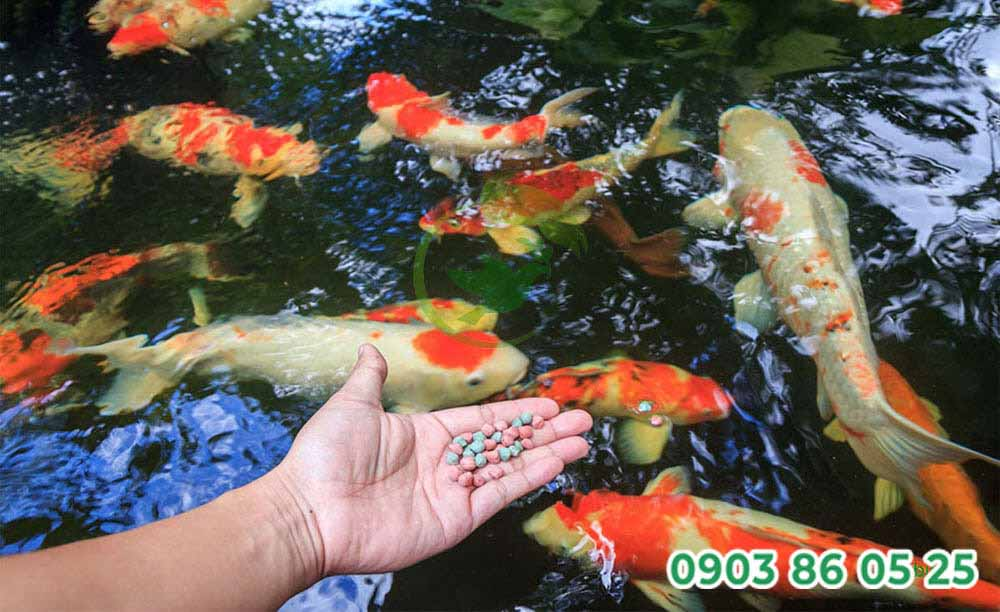 lieu-luong-vitamin-c-cho-ca-koi