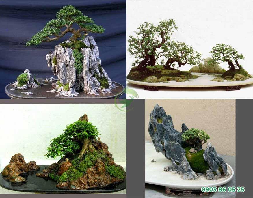 tieu-canh-bonsai